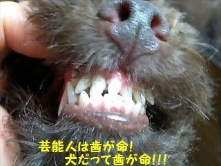 犬だって歯が命!.JPG