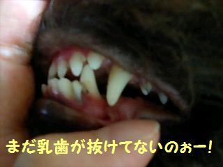 乳歯が抜けてないの〜〜.JPG